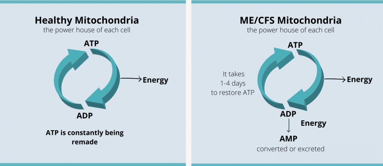 PEM Mitochondria composite 3600 x 1560 2